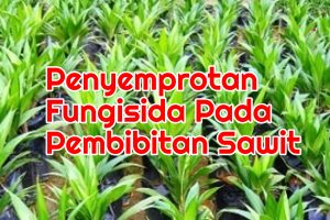 Penyemprotan Fungisida Peresemaian Sawit