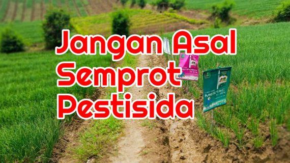 Petani Jangan Menyemprot Tanaman Dengan Pestisida Ini, Jika Tidak Ingin Rugi