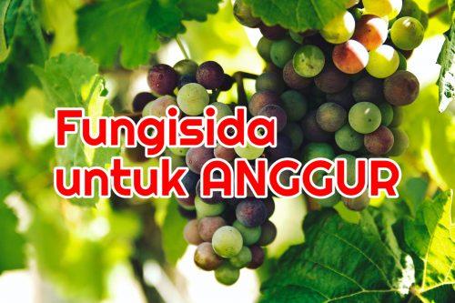 Semprot Fungisida Anggur