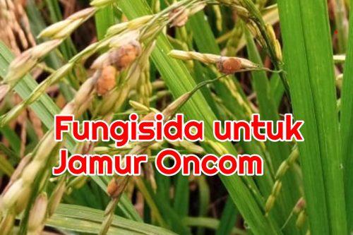 fungisida untuk jamur oncom