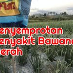 Fungisida untuk Penyemprotan Penyakit Bawang Merah